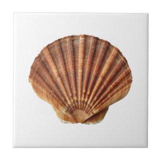 Brown scallops shell on white tile