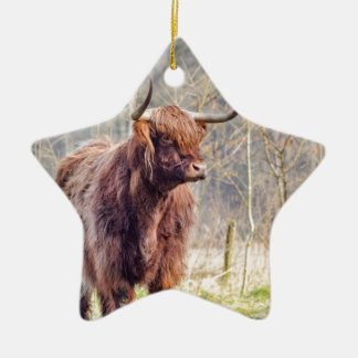 Brown scottish highlander cow standing in spring ceramic star decoration