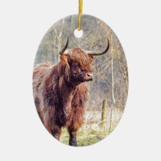 Brown scottish highlander cow standing in spring christmas ornament