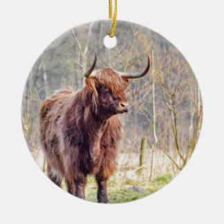 Brown scottish highlander cow standing in spring round ceramic decoration