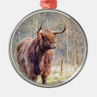 Brown scottish highlander cow standing in spring Silver-Colored round decoration