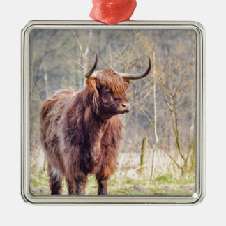 Brown scottish highlander cow standing in spring Silver-Colored square decoration