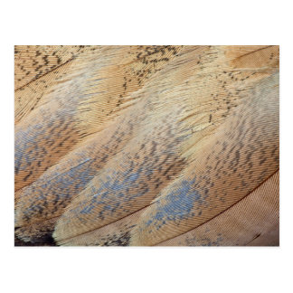 Brown Senegal Bustard Abstract Postcard