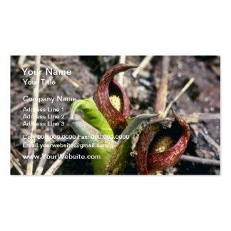 Brown Skunk Cabbage (Symplocarpus Foetidus) flower Pack Of Standard Business Cards