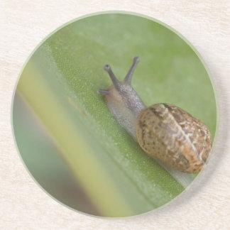 Brown snail on dew covered leaf beverage coaster