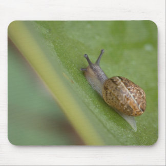 Brown snail on dew covered leaf mouse mat