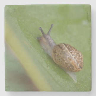 Brown snail on dew covered leaf stone coaster