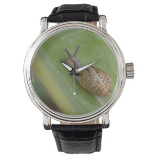 Brown snail on dew covered leaf wrist watches