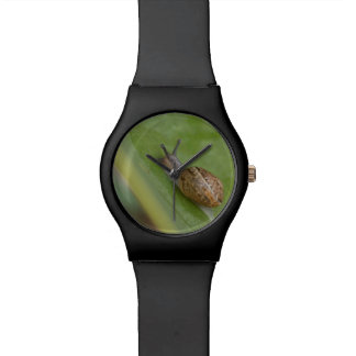 Brown snail on dew covered leaf wristwatches