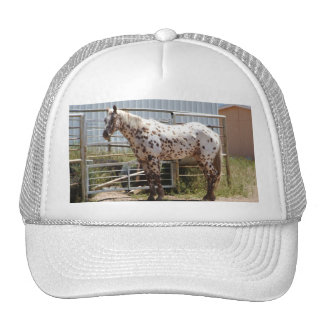 Brown spotted Appaloosa horse Cap