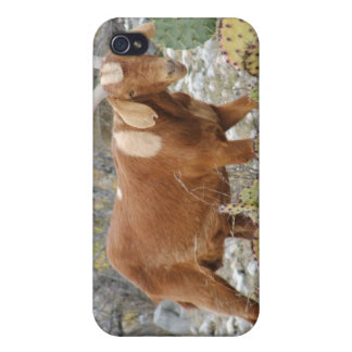 Brown spotted goat cover for iPhone 4