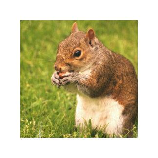 Brown Squirrel Canvas Print