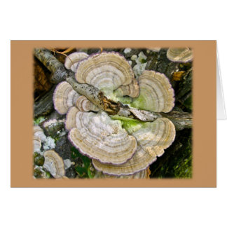 Brown Striped Shelf Fungi Items Greeting Card
