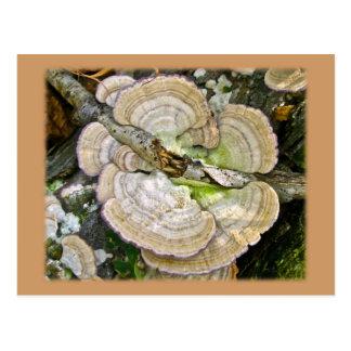 Brown Striped Shelf Fungi Items Post Card