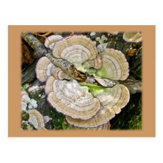 Brown Striped Shelf Fungi Items Postcard