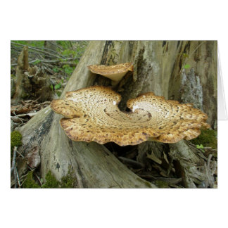 Brown Striped Shelf Fungus Coordinating Items Greeting Card