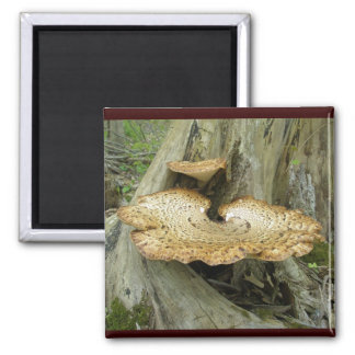 Brown Striped Shelf Fungus Coordinating Items Square Magnet