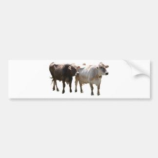 Brown Swiss Cows Bumper Sticker