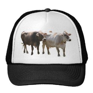 Brown Swiss Cows Cap