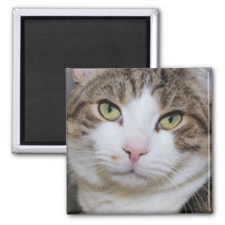BROWN TABBY AND WHITE CAT MAGNET