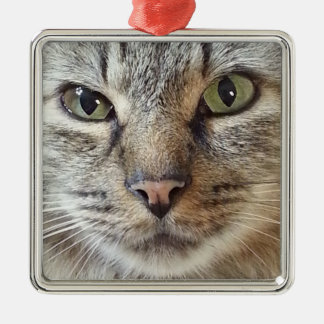 Brown Tabby Cat Silver-Colored Square Decoration