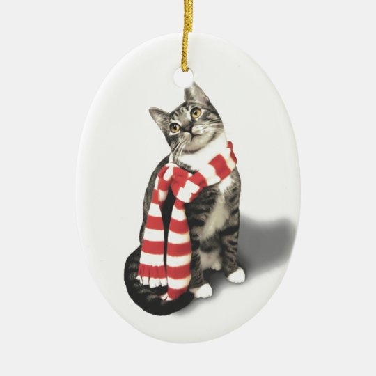 Brown Tabby Cat in a Red and White