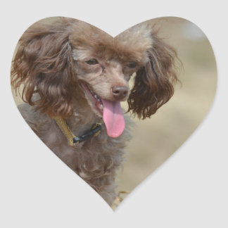 Brown Toy Poodle Heart Sticker