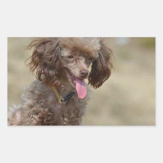Brown Toy Poodle Rectangular Sticker