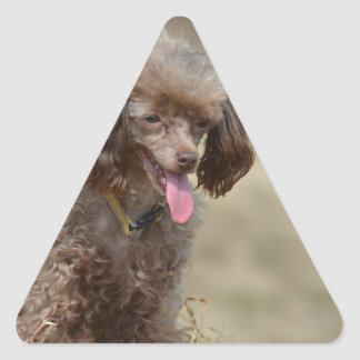 Brown Toy Poodle Triangle Sticker