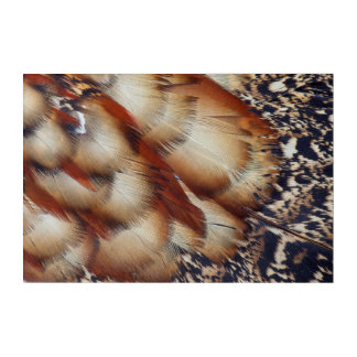 Brown Tragopan Feather Abstract Acrylic Print
