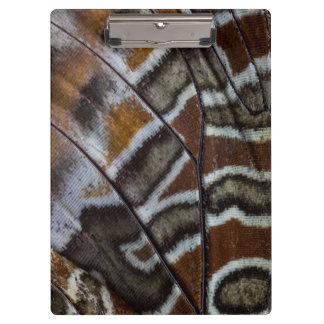 Brown tropical butterfly close-up clipboard