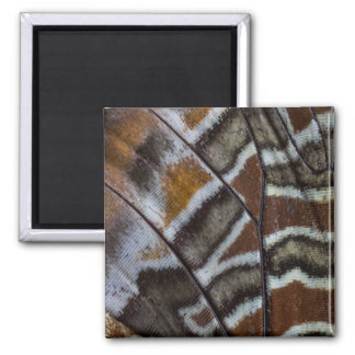 Brown tropical butterfly close-up square magnet
