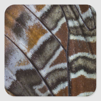 Brown tropical butterfly close-up square sticker