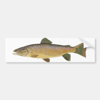 Brown Trout. Bumper Sticker