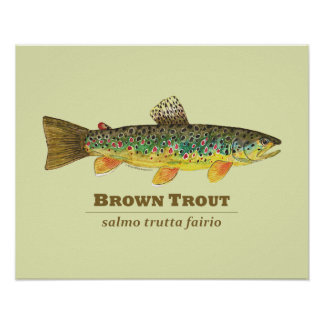 Brown Trout Latin Ichthyology Poster
