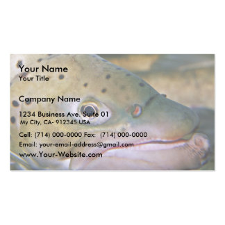 Brown trout pack of standard business cards