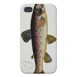 Brown Trout (Salmo Iasustris) plate XXIII from 'Ic iPhone 4/4S Cover
