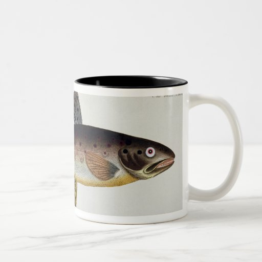Brown Trout (Salmo Iasustris) plate XXIII from 'Ic Mug