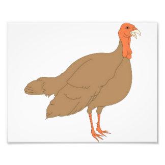 Brown Turkey Art Photo