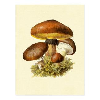 Brown Vintage Mushroom Postcard