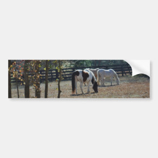 Brown &White Painted Horse and Cream Horse Bumper Sticker