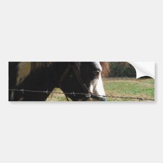 Brown &White, Painted Horse, Queen Ann Lace flower Bumper Sticker