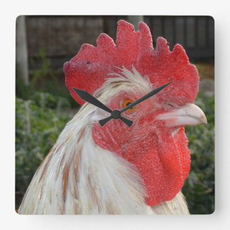 Brown White Rooster Face, Square Wall Clock