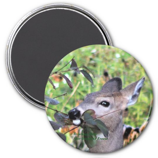Browsing Deer After the Gardens Freeze Magnet