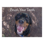 Brush Your Teeth Rottweiler Puppy Poster