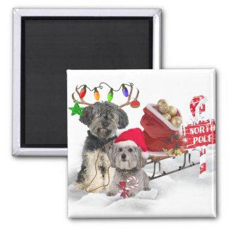 Brussels Griffon Christmas gifts Fridge Magnet