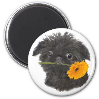 Brussels Griffon Daisy gifts 6 Cm Round Magnet