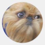 Brussels Griffon Dog Stickers