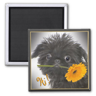 Brussels Griffon Magnets