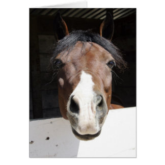Brwon and white horse in barn greeting card